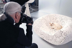 Лагерфельд снял свою кошку для рекламы косметики