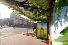 Киевские остановки зазеленели