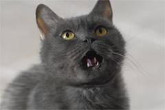 Мегафон рассердил котика