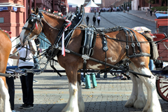 BUD Alcohol free � ����������� Clydesdales �� ������� ����� ����������...