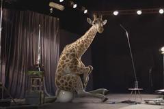 Жираф прорекламировал средство для мужской потенции