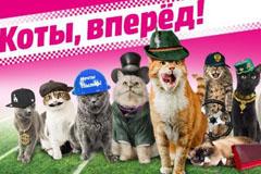 """Маркетинговая кампания """"Коты, вперед!"""" от MediaMarkt"""