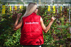 У пермяков появится возможность дистанционно выращивать розы