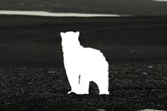 В новой кампании WWF животные исчезли, чтобы побудить людей к действиям
